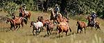 Cowboy Photography Workshop   Erickson Cattle Co. ..Wyatt Hansen and his dad move horses... Photo by Al Golub/Golub Photography