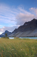 Grass blowing in the wind on the shore of Bow Lake overlooking crowfoot glacier in late afternoon