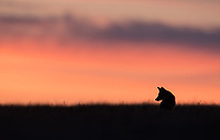 Very late in the evening, I lay on my belly to capture a few silhouettes.