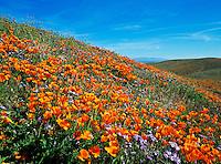 California State Poppie Reserve in Lancaster, California