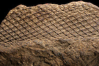 """External mold fossil Lepidodendron from the """"Coal Measures"""" of eastern Ohio, USA."""