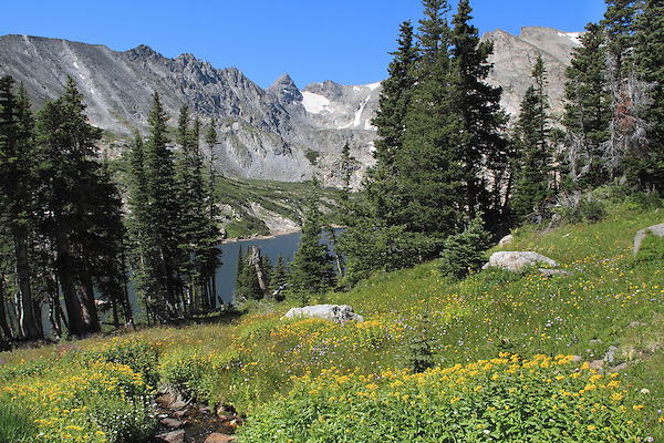 Alpine wildflowers above Isabelle Lake in the Indian Peaks Wilderness Area, Boulder, Colorado, USA Private photo tours to Indian Peaks.