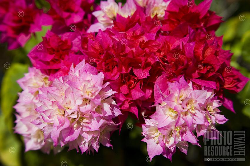 Tropical Hawaiian flowers