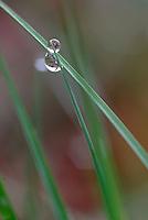 Regendruppels in het gras