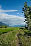 Hiking along the dike trail at Kootenai National Wildlife Refuge near Bonners Ferry, Idaho on an early summer day with fresh green grass and mountains in the background