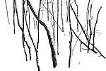 winter sketch 090 V1