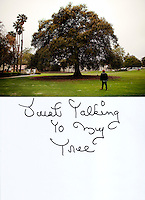 "This is a scan of a print that was given to the subject, Mike Vance, so that he could write his thoughts. He tersely described what was on his mind by saying:..""Just Talking to my Tree""..Ventura, California, July 20, 2010 -Mike Vance walks across Mission Park to sit under his favorite tree, an 120-year-old Moreton Bay Fig tree. Mr. Vance says he sometimes like to take naps under the giant tree. Mr. Vance has been homeless roughly since 1966, when he says he was crushed by a tree that left him unable to hold a steady job. He survives from small SSI checks and the kindness of the local Knights of Columbus Hall that allows him to sleep on their steps and occasionally feeds him. Mr. Vance likes to read and is often seen on these benches and in the neighboring park reading magazines and books people leave behind. Because of the public rest rooms in Mission Park as well as its proximity to the River it is a popular spot for the homeless in Ventura. .."