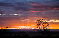 Sunet over Tarangire National Park in northern Tanzania.  Photographed from the Kikoti Tent Lodge.