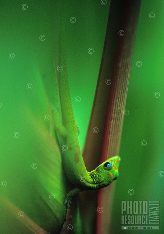 small gecko on leaf