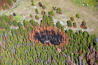 Hot Spot, forest fire burn area, northern Colorado.  Sept 2012