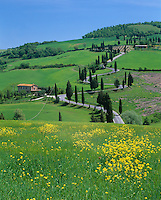 Tuscany, Italy, <br /> Cypress lined road curving on a hillside near Monticchiello, in the Val d' Orcia