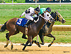 Ride The Shark winning at Delaware Park on 7/25/16<br /> Ride The Shark was later disqualified and placed second behind #3 Cattindog