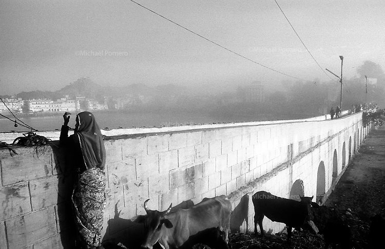 11.2010 Pushkar (Rajasthan)<br /> <br /> Woman selling plant to feed cows during the pilgrimage of kartik purnima.<br /> <br /> Femme vendant des plantes pour nourrir les vaches pendant le p&egrave;lerinage de kartik purnima.