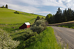 Idaho, North Central, Moscow, Julietta. A red barn on the eastern edge of the Idaho Palouse in spring.