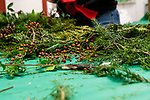 BETHLEHEM, CT. 06 December 2018-120618 - Little berries and small pine branches line the table during the annual Wreath making social event at March Farms in Bethlehem on Thursday. Sue March the owner of March Farms says for everyone to sig up and get your spots early next year as they went very quickly this year. Bill Shettle Republican-American