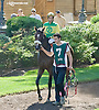 Gadget Man before The Kent Stakes (gr 3) at Delaware Park on 9/20/14