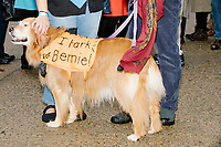 "A dog wears a vest reading ""I bark for Bernie!"" as supporters of Democratic presidential candidate and Vermont senator Bernie Sanders gather after the candidate spoke at a small rally outside the NH State House after he filed the required paperwork and paid the $1000 filing fee to be on the 2020 Democratic presidential ballot in the NH Secretary of State's Office in Concord, New Hampshire, on Thu., October 31, 2019. As part of the filing process, Sanders signed a ceremonial primary ballot that is signed by all candidates in the race. Sanders was accompanied during the process by his wife Jane O'Meara Sanders."