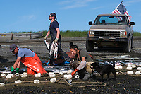 Family and friends pick sockeye salmon out of a setnet in Ekuk, Alaska on July 4, 2019. From left to right: Kai Raymond, Chris Howe and Nia White. (Photo by Karen Ducey)