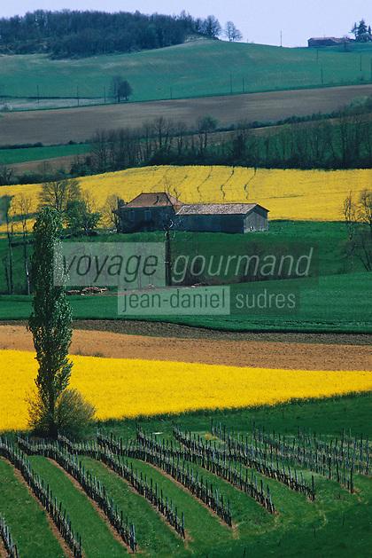 Europe/France/Aquitaine/47/Lot-et-Garonne/Côtes de Duras: Le vignoble