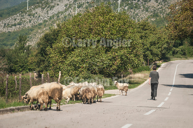 Sheep and goats on the highway--headed down the valley from Plana toward Slolac, Herzegovina