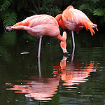 12 January 2015: Photo taken at Flamingo Gardens in Davie, Florida.