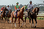 DEL MAR, CA  SEPTEMBER 2: #8 King of Speed, ridden by Gary Stevens, in the post parade of the Del Mar Juvenile Turf on September 2, 2018 at Del Mar Thoroughbred Club in Del Mar, CA. (Photo by Casey Phillips/Eclipse Sportswire/Getty ImagesGetty Images