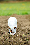 Emma digging in garden dirt.