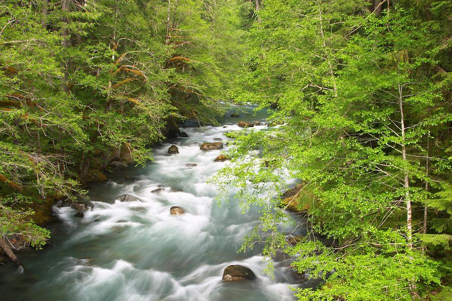 Ohanapecosh River flowing through forest, Ohanapecosh Campground, Mount Rainier National Park, Lewis County, Washington, USA