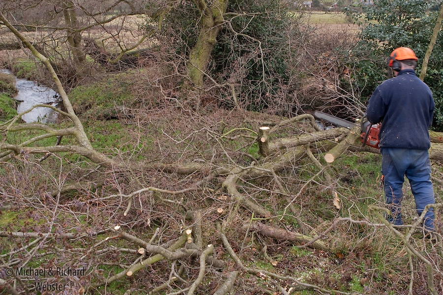 One of the periodic reserve management tasks is to coppice the Alder trees.  This activity, which has been undertaken for centuries, helps to prolong the life of the tree.