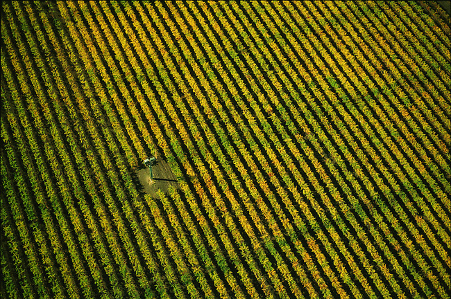 Aerial of fall vineyard near Yountville.  Paradigm