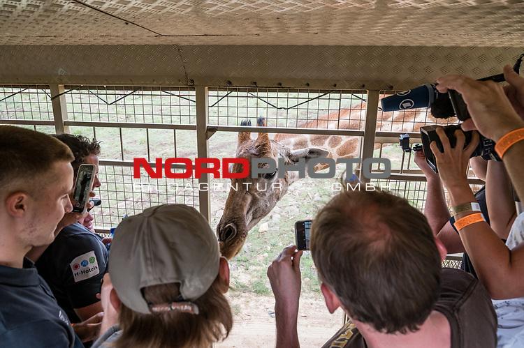 07.01.2019, Lion & Safari Park, Broederstroom, Kalkheuvel, RSA, TL Werder Bremen Johannesburg Tag 05<br /> <br /> im Bild / picture shows <br /> Eine Giraffe schnuppert in den Ausflugsbus hinein, Johannes Eggestein (Werder Bremen #24), <br /> <br /> Teil der Spieler besucht am 5. Tag des Trainingslager eine geführte Tour im Lion & Safari Park, <br /> <br /> Foto © nordphoto / Ewert