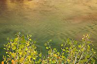Nature in Zion National Park Utah