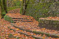 Old stairs in autumn, Oregon
