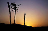 Silhouetted palm trees at sunset in the Sahara Desert, Douz Village, Tunisia.