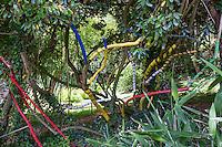 France, Manche (50), Saint-Germain-des-Vaux, Jardin en Hommage à Jacques Prévert, bandages de couleur sur troncs d'Eleagnus