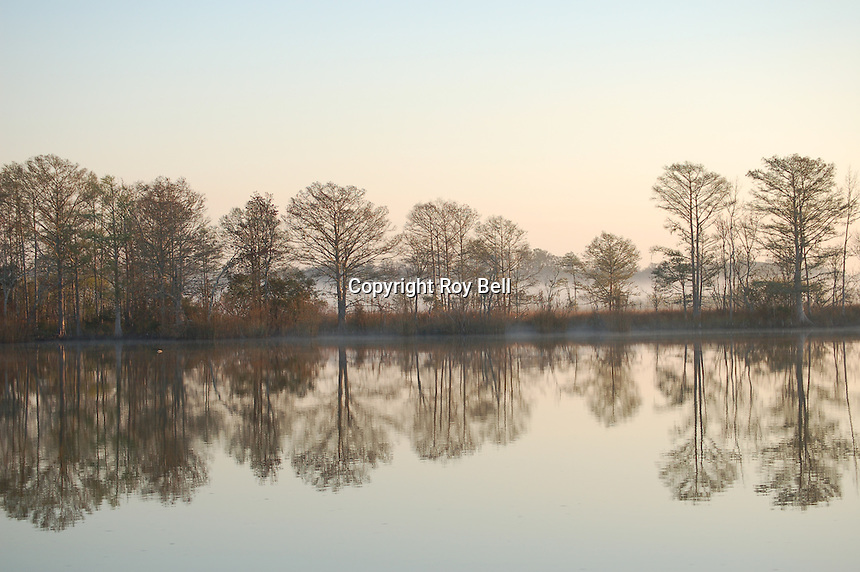 Tree's refected in mirror image on the water with bands of fog