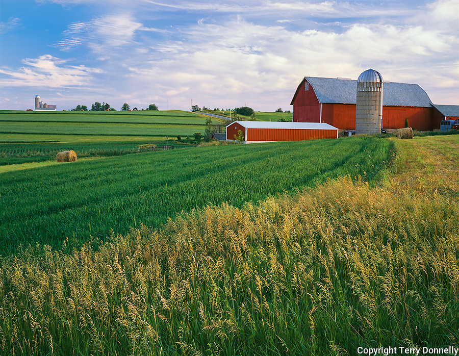 Iowa County, WI<br /> Evening light on summer fields and red barn on Pleasant Ridge
