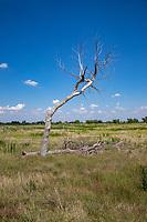 Cimarron National Grassland in Western Kansas.