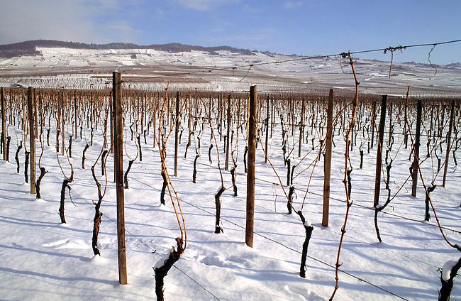 Alsace, Haut-Rhin (68). Vignoble de Kientzheim sous la neige. *** Vineyards of Kientzheim and snow. Haut-Rhin, Alsace.