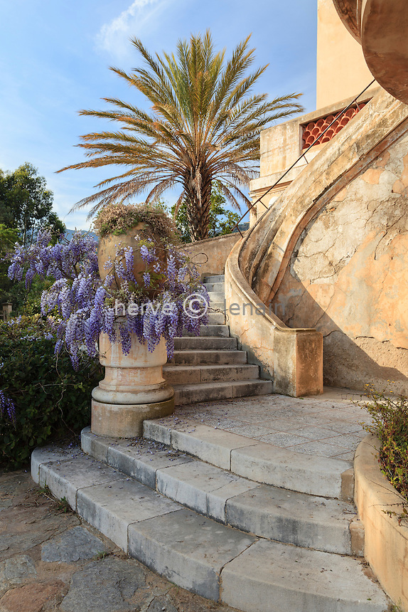 France, Var, Le Domaine du Rayol: stairs to the terrace of the Hotel de la Mer,  glycine in bloom and a date palm (Phoenix dactylifera).