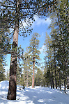 Cross-country ski trail at Donner Memorial State Park