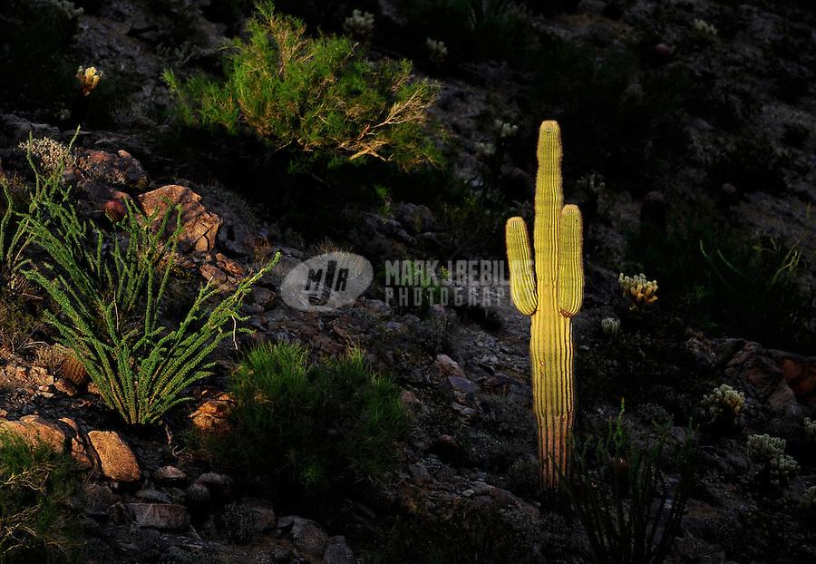 desert weather Arizona South Mountain Phoenix cactus saguaro boulders rocks bushes