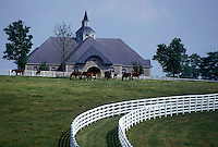 horse, Lexington, KY, Kentucky, Blue Grass Country, Horses graze in a pasture on a horse farm in the bluegrass country of Lexington.