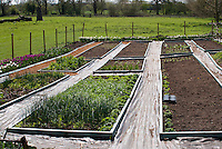 New flower cutting garden with raised beds, plastic landscape fabric mulch in paths, fence, field beyond, newly planted, with good brown soil earth dirt visible