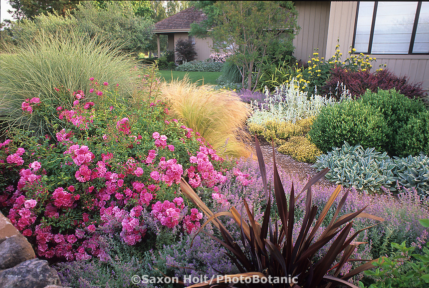 Phormium 'Dark Delight' and Rose 'Flower Carpet' in summer garden by side of house. Design: Freeland Tanner