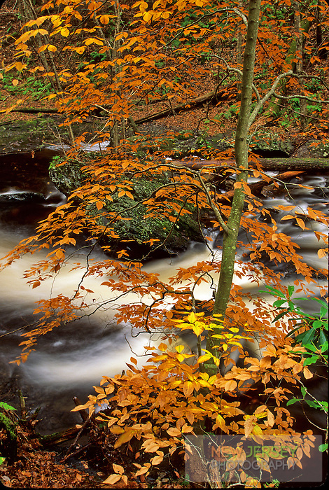 Autumn Foliage and Flowing River, Delaware Water Gap, New Jersey