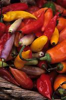 Amérique/Amérique du Sud/Pérou/Lima : Marché de Surquillo - Piments colorés