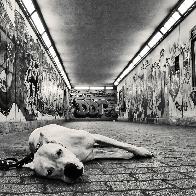 a dog looking at the camera with sad but sweet eyes in an underground walkway covered in graffiti