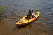 German Shepherd dog riding in a kayak on an inland lake in Michigan's Upper Peninsula.