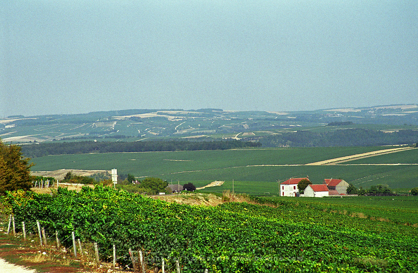Chablis: The view over the vineyards from Prehy at the southern edge of the wine district